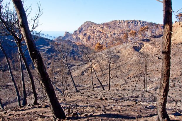 forest fire, Mallorca, Andratx, photo by Oliver Neilson